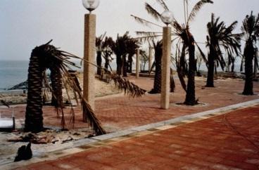 keane palm
